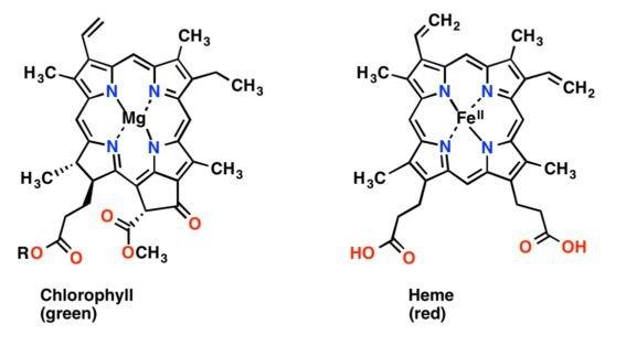 Coordination chemistry of metalloporphyrins?