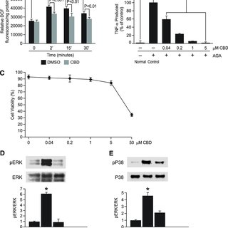 Phosphorylation of ERK and P38, but not JNK, causes TNF-α