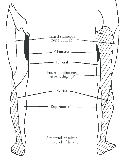 lower leg nerve diagram 1997 f150 4wd wiring distribution of cutaneous nerves in the limb by guest on september 24 2015