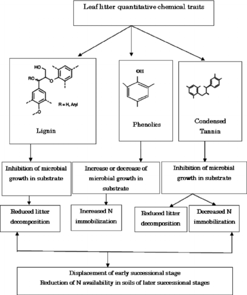 small resolution of schematic reorientation of the effects of quantitative chemicals from leaf litter on various soil processes and