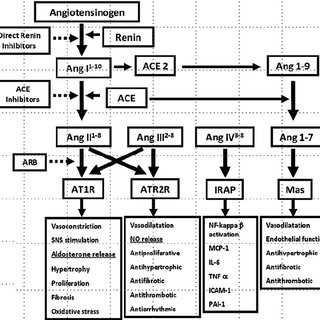 (PDF) Renineangiotensin system antagonists in the