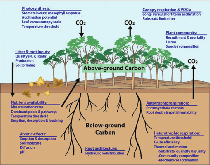 diagram of a tropical forest 1969 mustang wiring conceptual direct and indirect factors likely to affect the response c