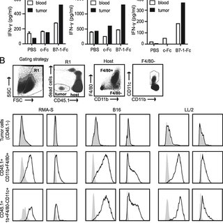 CD28 and CTLA-4 differentially regulate NK cell IFN-g