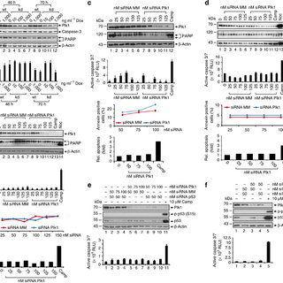 Assessment of cell-cycle properties and apoptosis in BI