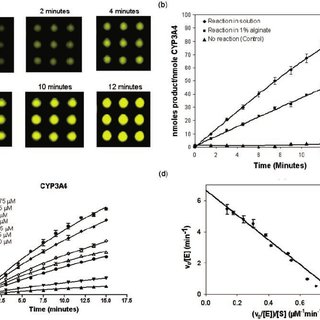 Reaction kinetics for CYP3A4 (10 nM) with