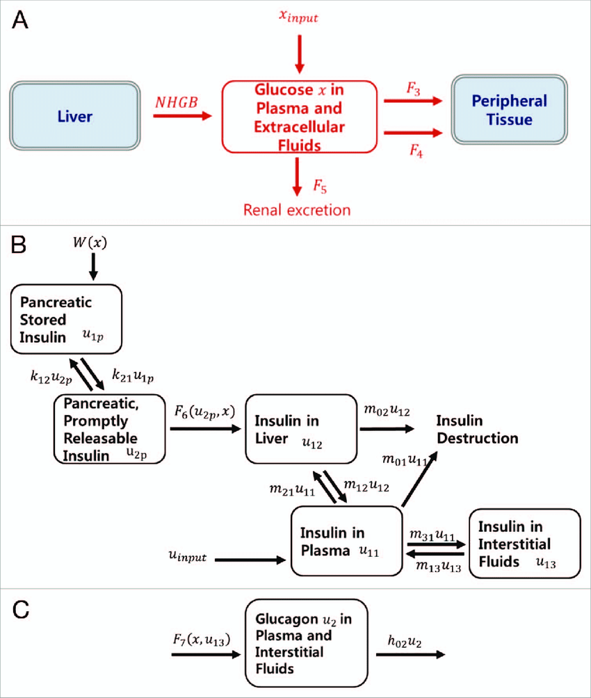 hight resolution of schematic diagram of the integrated mathematical model consisting of three subsystems a glucose