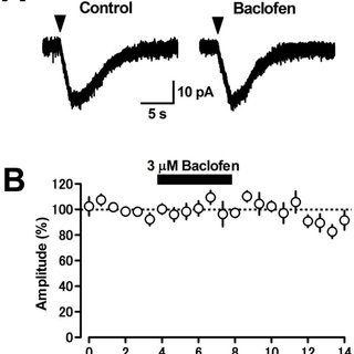(A) Application of the GABAB receptor agonist baclofen (3