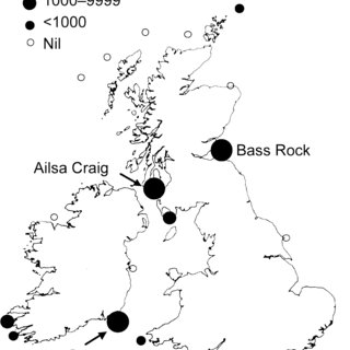 Map showing British and Irish Gannet colonies, and numbers