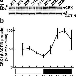 (PDF) Circadian Dynamics of the Cone-Rod Homeobox (CRX