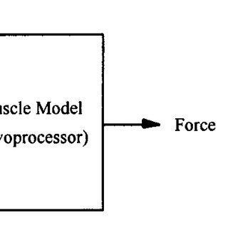 EMG signal processing algorithm for estimating the muscle