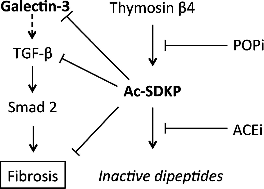 Hypothesised mechanism by which the tetrapeptide