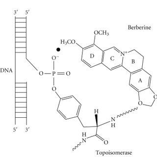(PDF) Polymorphic Nucleic Acid Binding of Bioactive