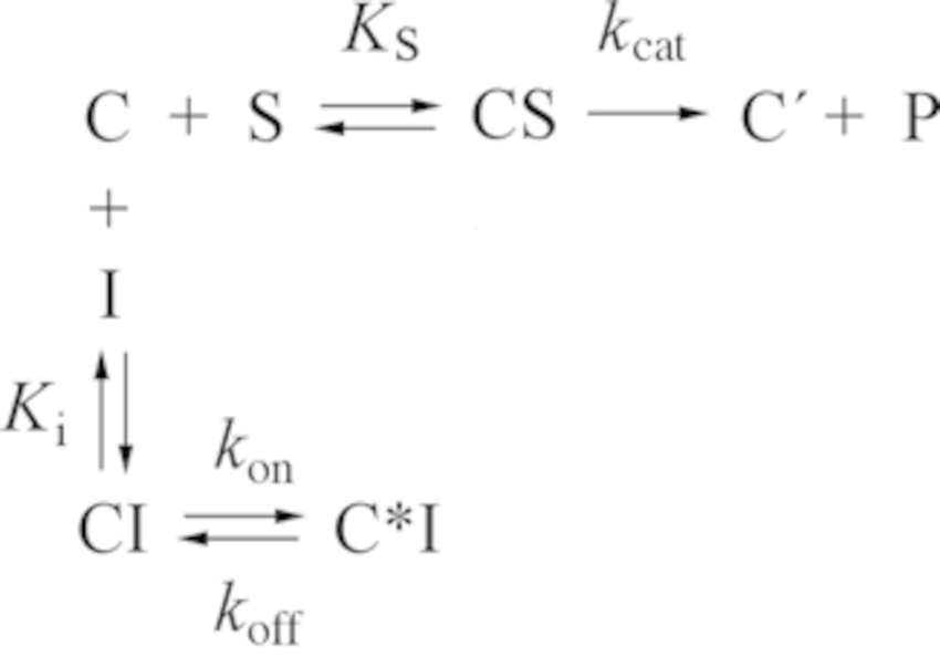Scheme 1. Kinetic model for the inhibition of the