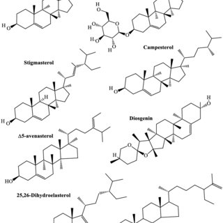(PDF) Phytochemical profile and biological activities of