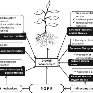 (PDF) Plant–Microbe Interactions for Sustainable