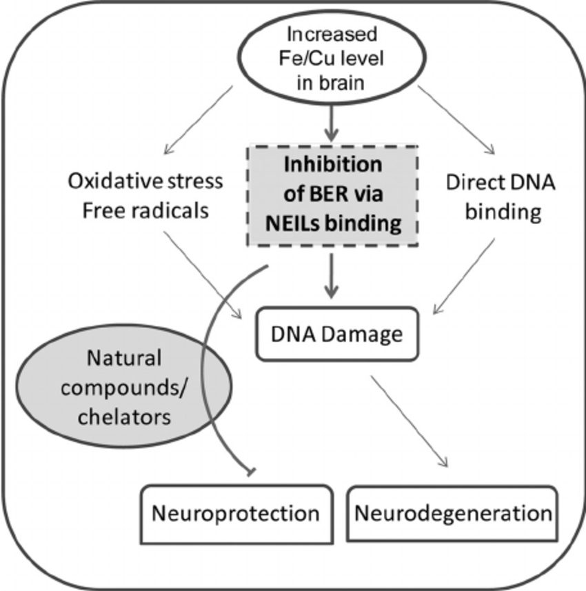Genome damage in neurodegenerative diseases due to