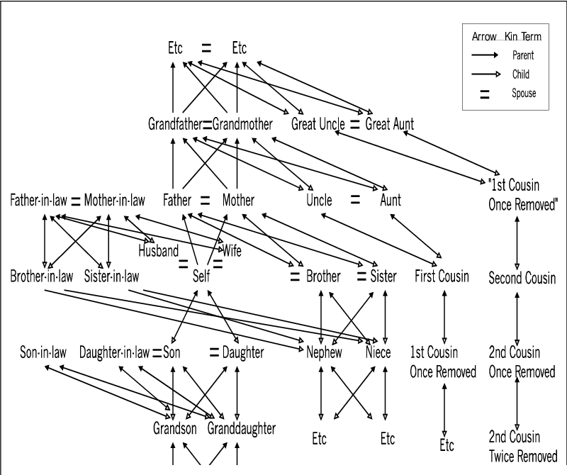 Graph of the American Kinship Terminology in algebraic