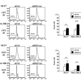 Effect of DSS1 knockdown in the breast cancer cell lines