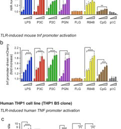 tlr ligand dose responses in mouse and human macrophage reporter cell lines a b dose response of a cytosol to nuclear translocation of the gfp rela  [ 840 x 1423 Pixel ]