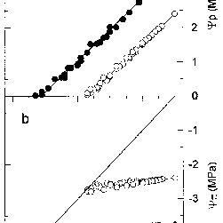 (PDF) Adjustments in leaf water relations of mangrove