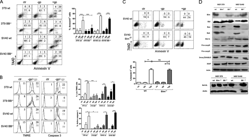 Mouse Cytotoxic T Cell-derived Granzyme B Activates the