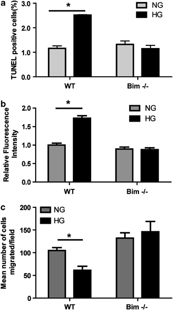 Bim expression is essential for high glucose (HG)-mediated