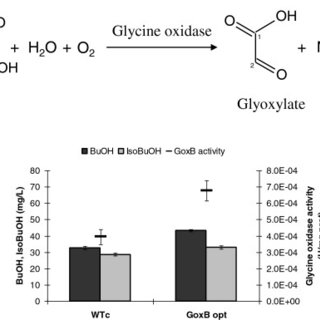 A novel pathway for butanol and isobutanol production
