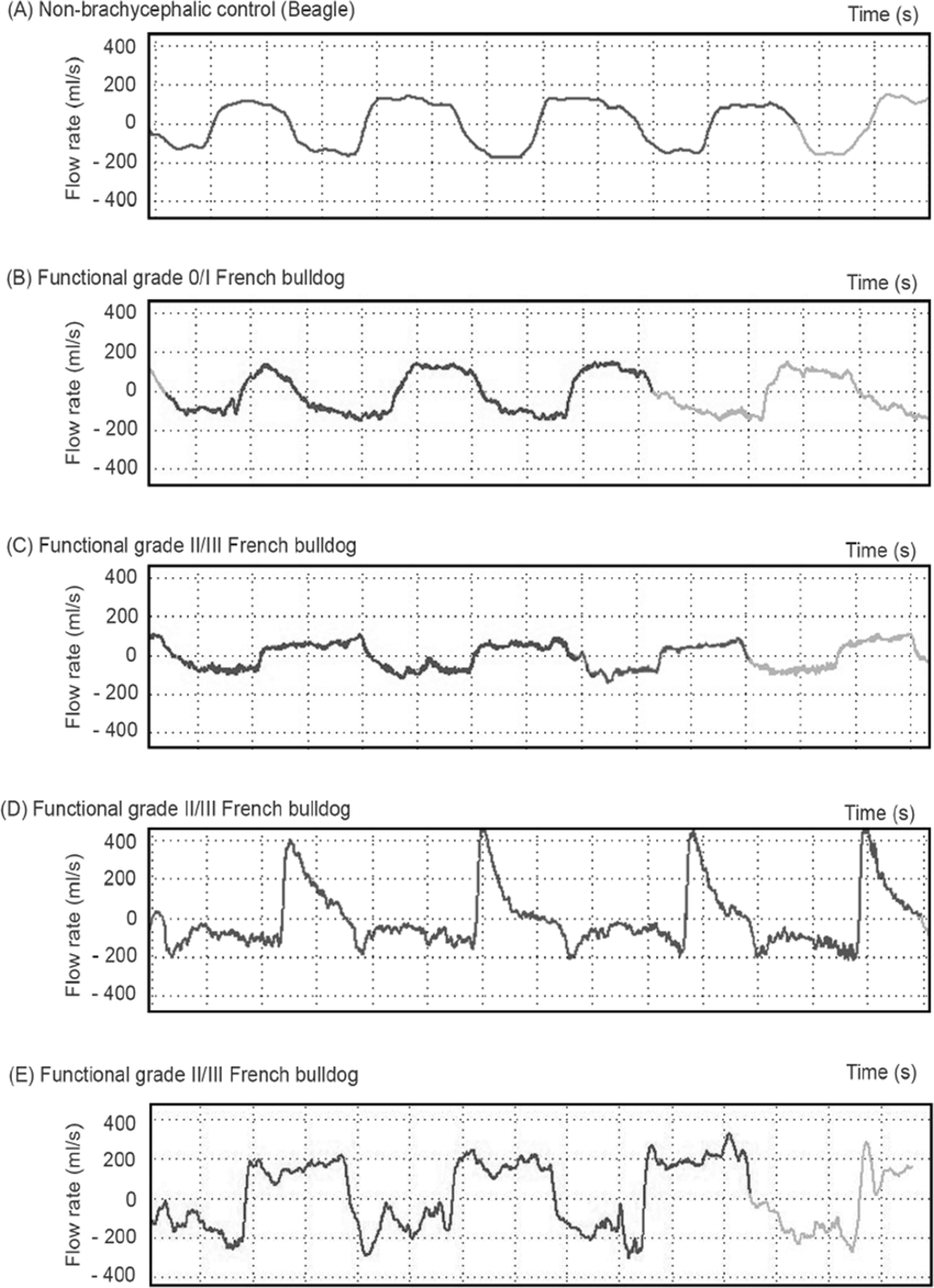 hight resolution of representative wbbp flow waveforms for several study dogs a non brachycephalic control