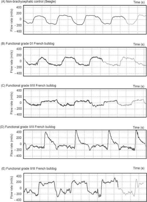 small resolution of representative wbbp flow waveforms for several study dogs a non brachycephalic control