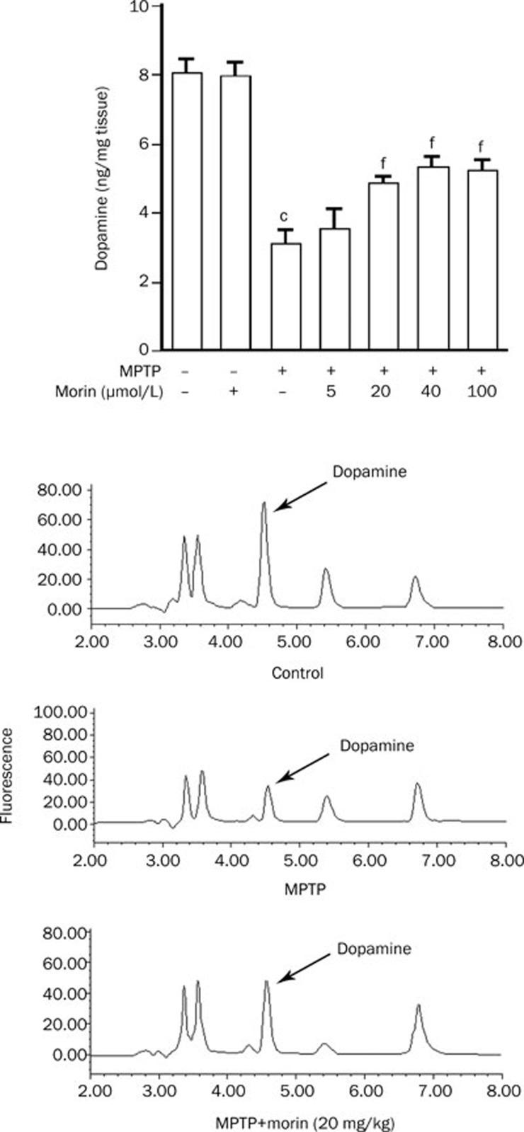 Morin attenuates striatal dopamine depletion in MPTP
