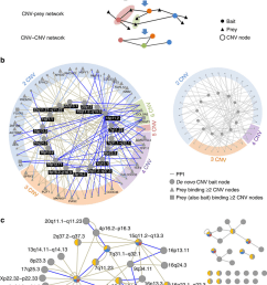 spliceform interactions connect genes from autism cnvs a schematic representation of the cnv prey and cnv cnv networks construction  [ 850 x 1196 Pixel ]