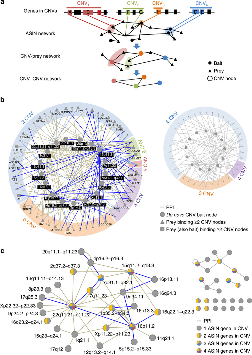 hight resolution of spliceform interactions connect genes from autism cnvs a schematic representation of the cnv prey and cnv cnv networks construction