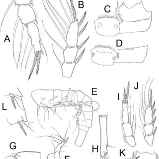 (PDF) Taxonomic revision of the Mexican Eucyclops