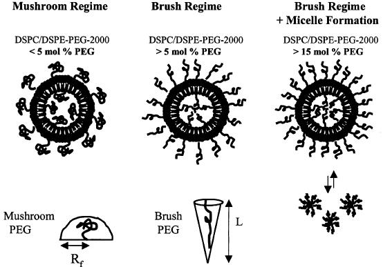 DSPC ͞ DSPE-PEG 2000 liposomes with 5, > 15 mol.% DSPE