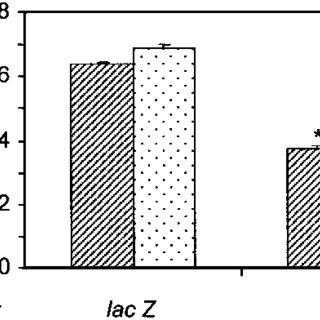 Proapoptotic effect of in vivo sst2 gene transfer. A, DNA