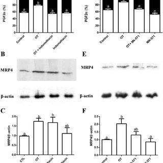 Regulation of directional secretion of PG in polarized