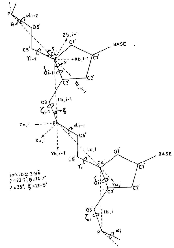 Section of a polynucleotide chain showing the