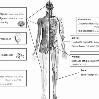 (PDF) Minireview: Recent Developments in the Physiology