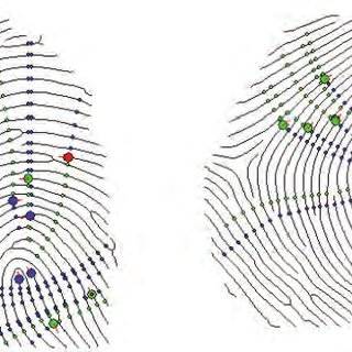 Two commonly used fingerprint features: (a) ridge