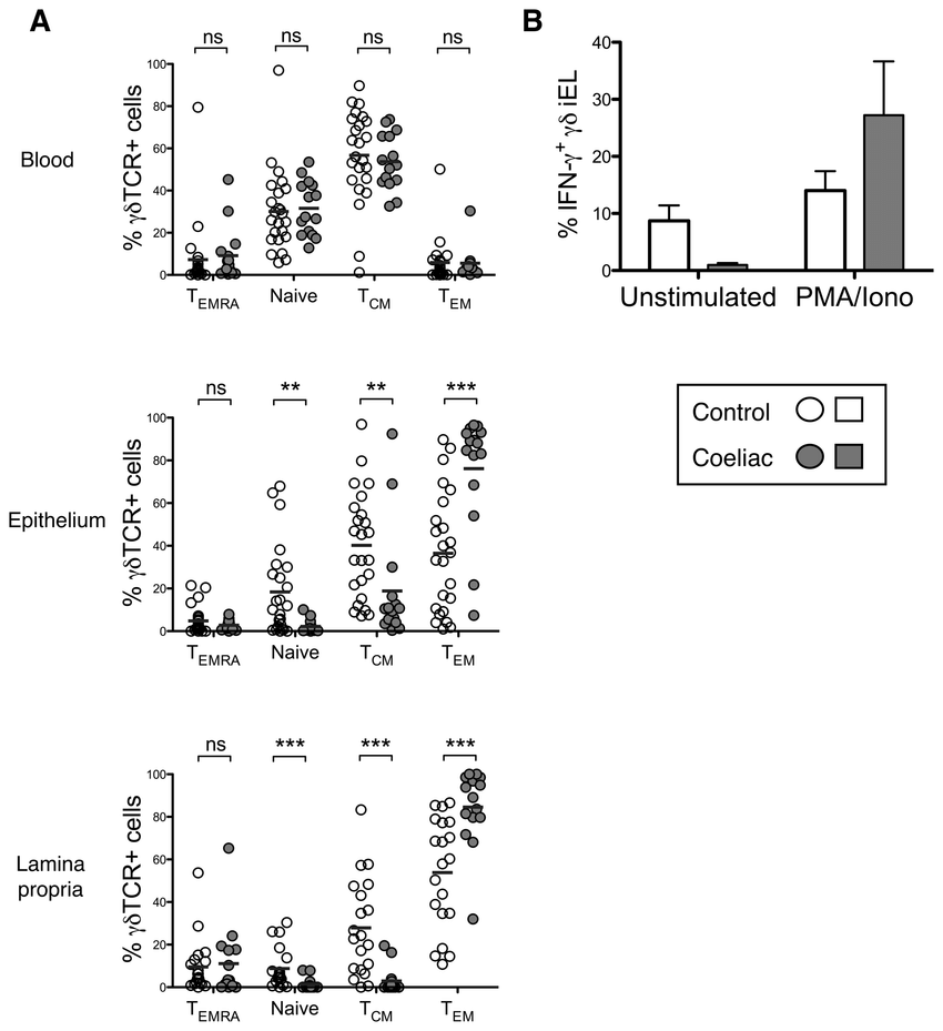 medium resolution of  t cells from the coeliac small intestine display a functional download scientific diagram