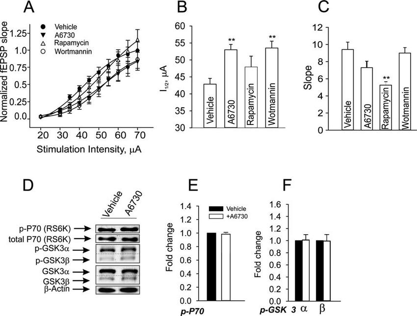AKT signaling components and basal synaptic activity. (A