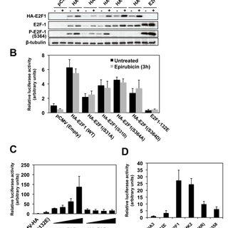 p38 induces E2F1 expression via MK2 upon epirubicin