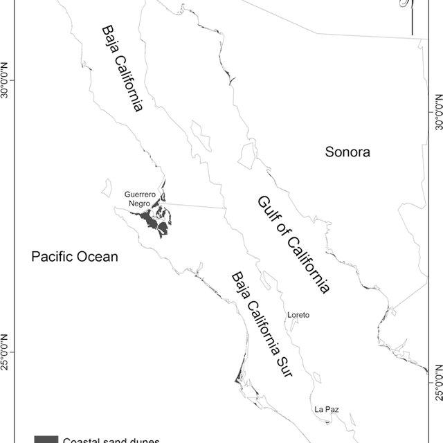 (PDF) Environmental Services of Beaches and Coastal Sand