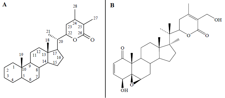 (A) Basic structure of Withanolides, (B) Basic structure