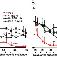 (A, B), Suppression of actively induced EAE by Y-MSPc vs