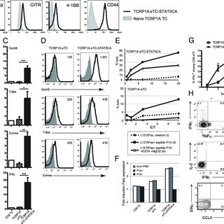 (PDF) Active STAT5 Regulates T-bet and Eomesodermin