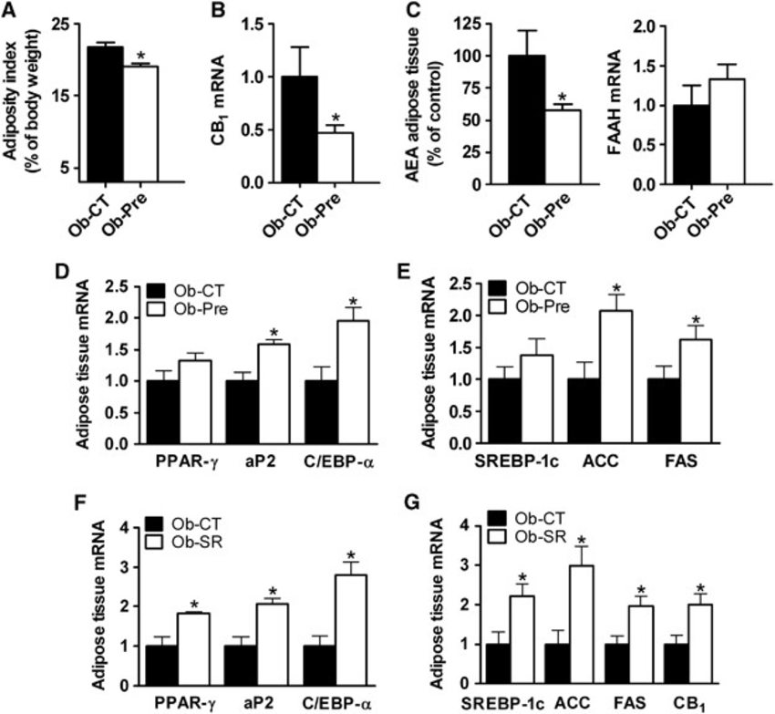 Changes in gut microbiota decrease adiposity and CB1 mRNA