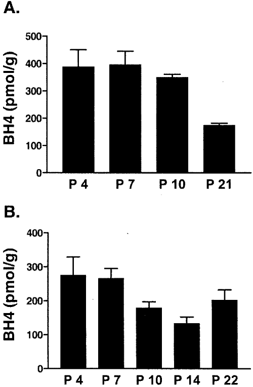 small resolution of developmental expression of bh4 in sweat gland containing footpads bh4 levels were quantified in
