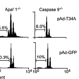 Genetic requirements of apoptosis induced by survivin