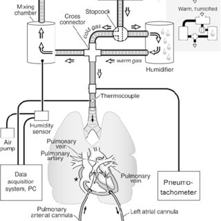 Scheme of the ventilation and perfusion circuits